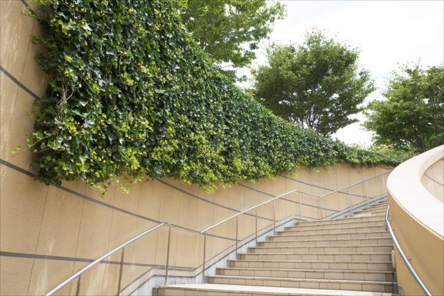 建物の壁面緑化で得られる効果を徹底解説します!